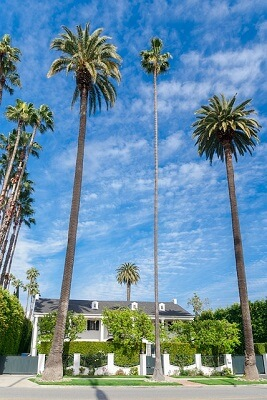 Beverly Hills house with palms
